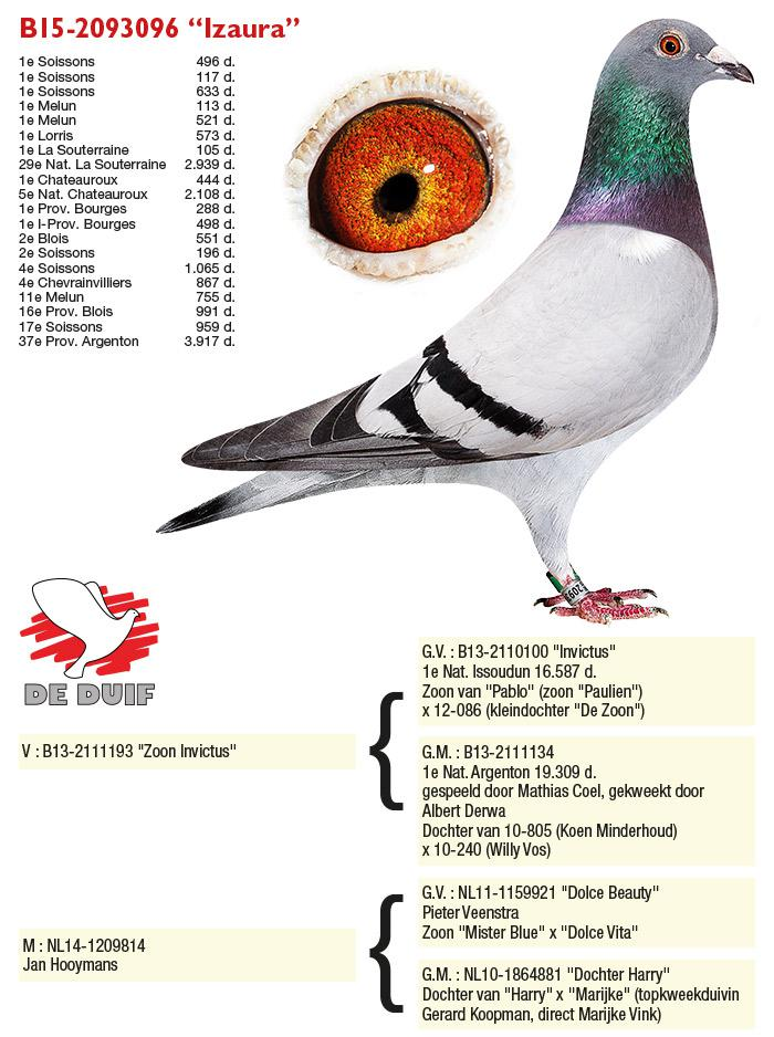 Hooymans Pigeons » Blog Archive » Albert Derwa has 2 Olympic