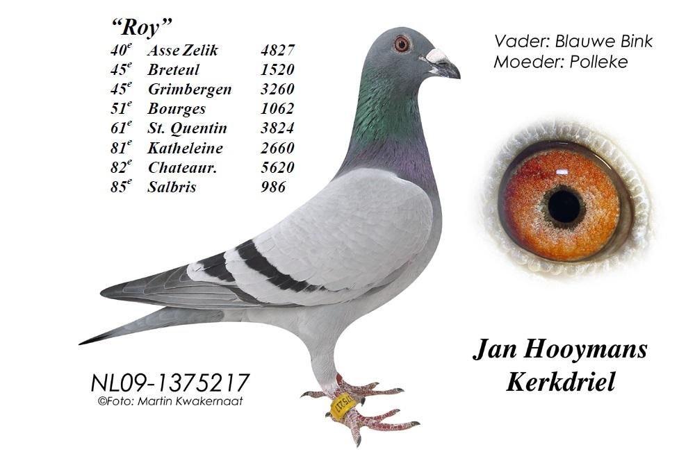 09-217-Roy