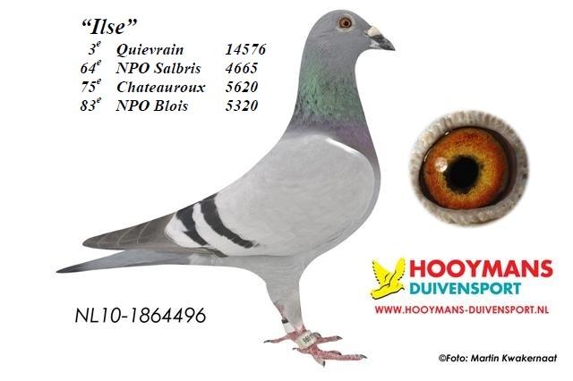 10-496-Ilse