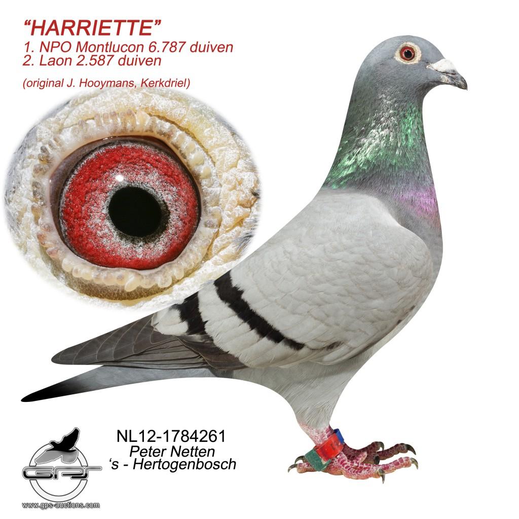 Harriette NL12-1784261