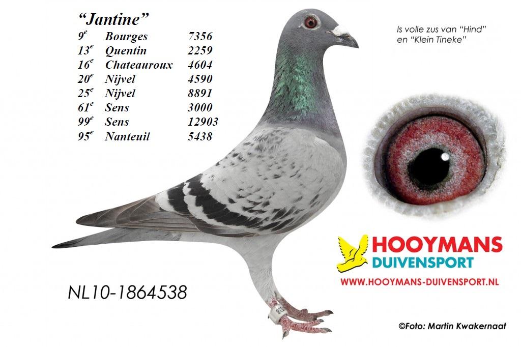Jantine 10-538-1024x682