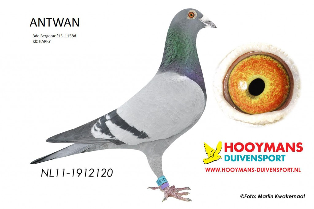 11-120 Antwan
