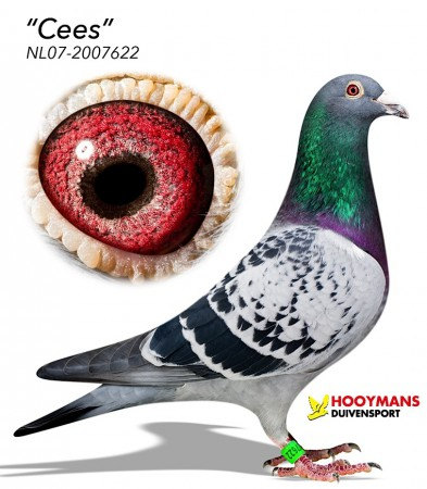 NL07-2007622-Cees-0