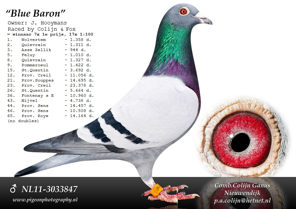 NL11-3033847