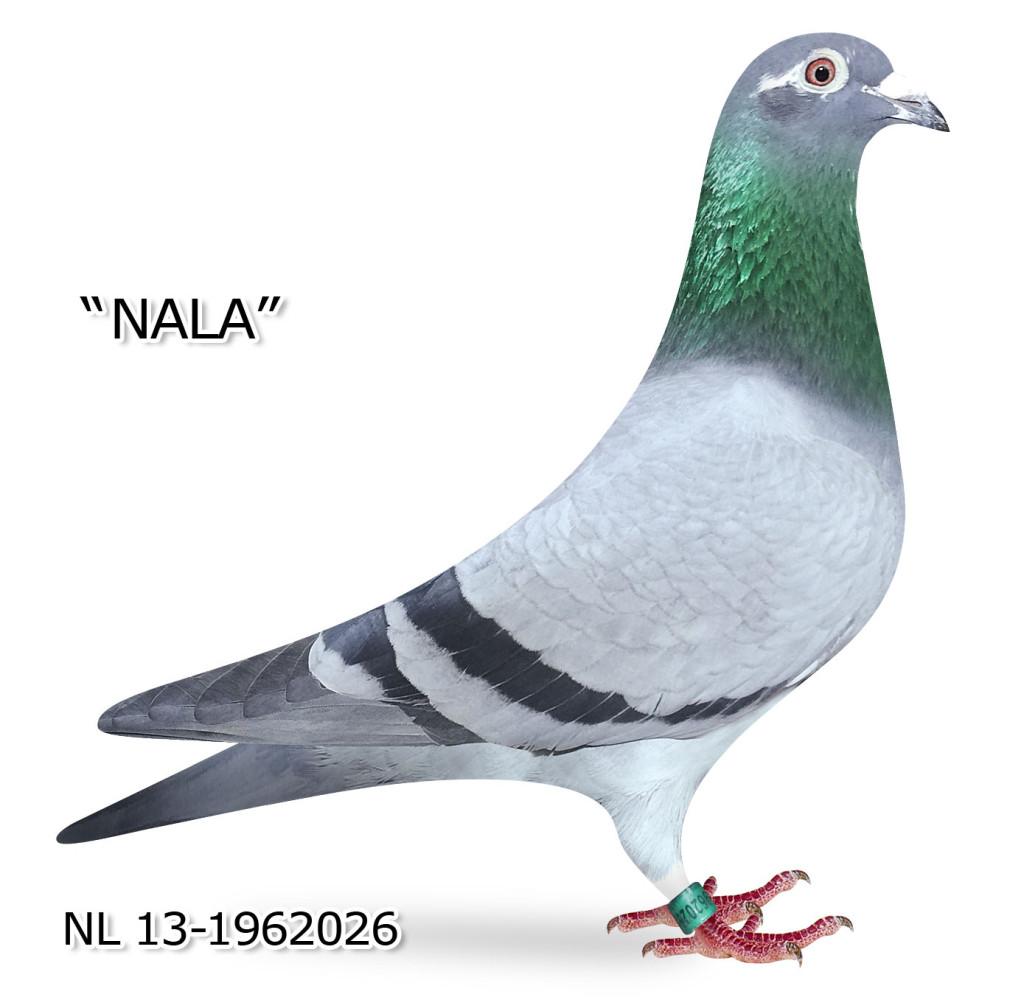 Nl 13 1962026